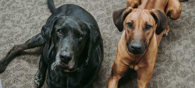 Picture of Onyx and Oakley